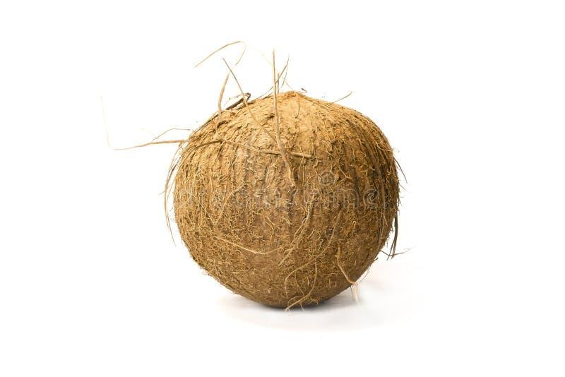 Kokosnöt royaltyfri foto