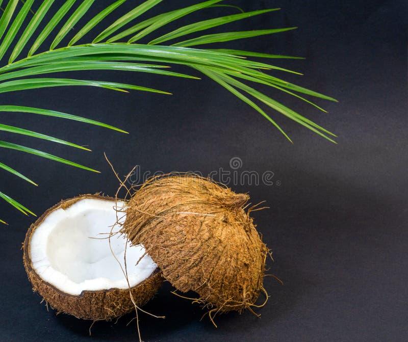 Kokosnöt exotisk frukt, två halvor av frukten i skalet, mörk bakgrund, selektiv fokus, gröna palmblad fotografering för bildbyråer