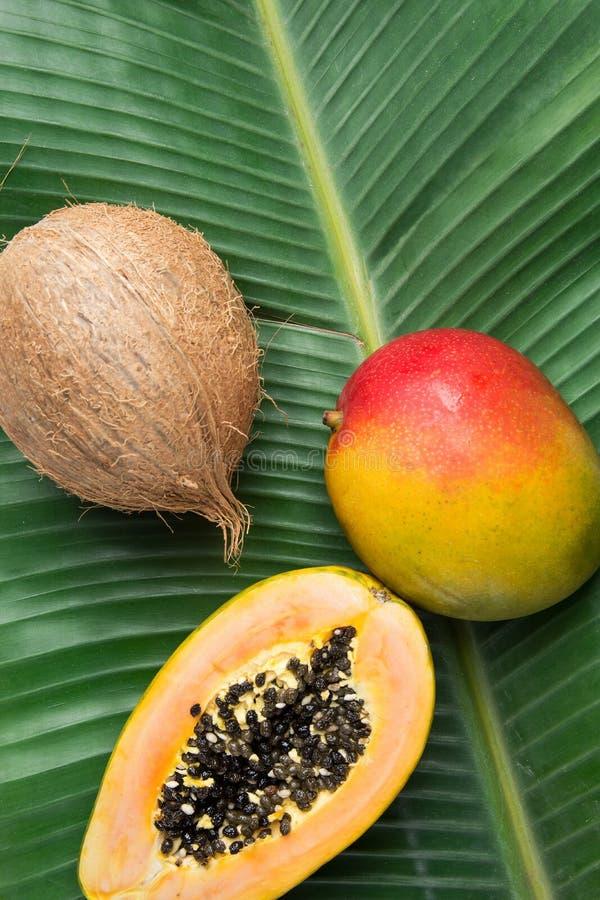 Kokosnöt för Papaya för mango för tropisk naturbakgrund mogen på den stora gröna palmbladet Sund sommar för matlivsstilvitaminer arkivfoto