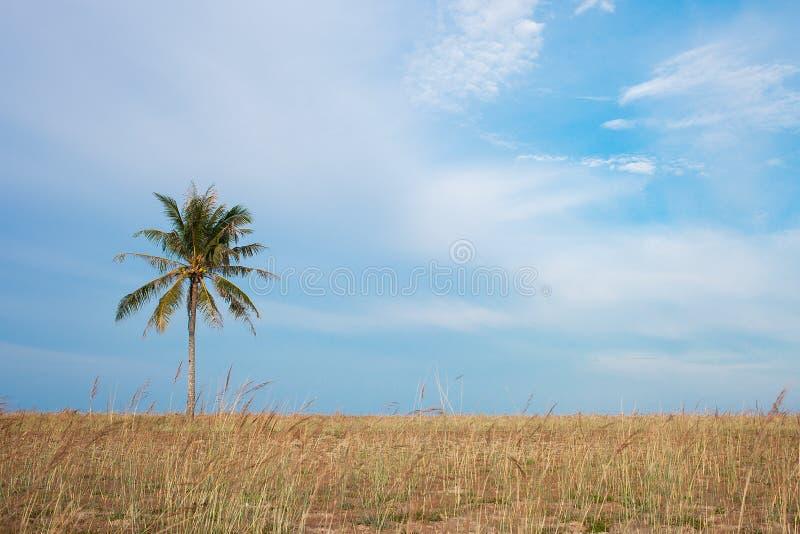 kokosnöt nära havstree royaltyfri foto