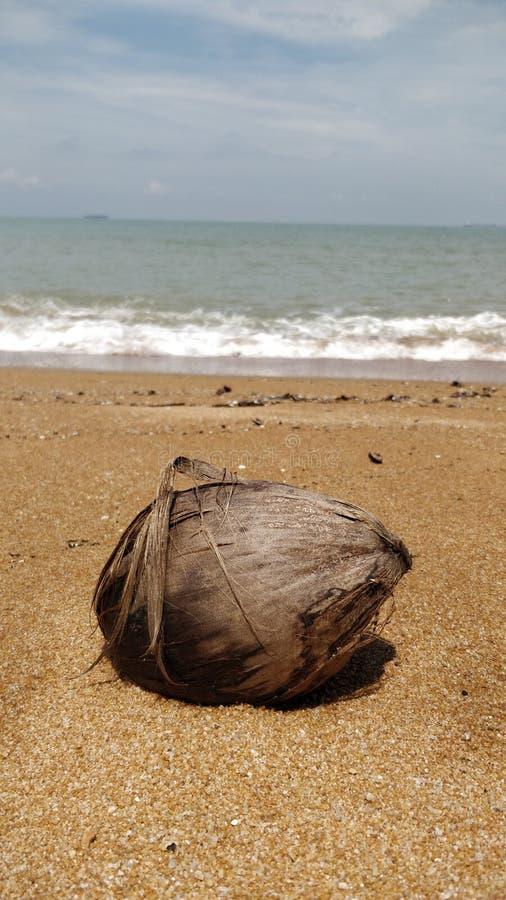 Kokosnöt och landskap av Pantai Pengkalan Balak Melaka royaltyfri bild