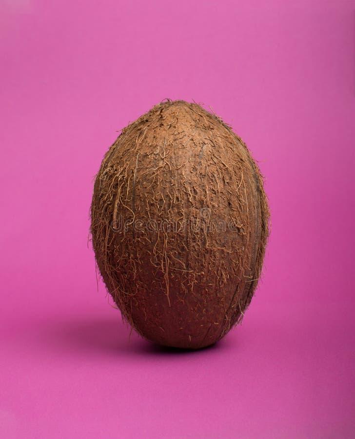 Kokosn?t p? kul?r bakgrund royaltyfri fotografi
