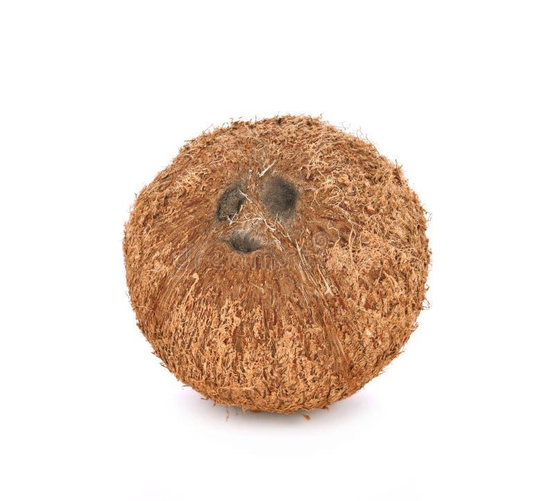Kokosnöt på vitbakgrund royaltyfria bilder