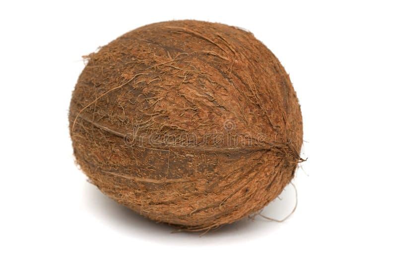 kokosnötcocosnucifera royaltyfri foto