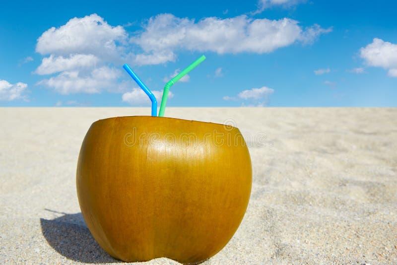 Kokosnötdrink med 2 sugrör på en tropisk strand royaltyfri foto