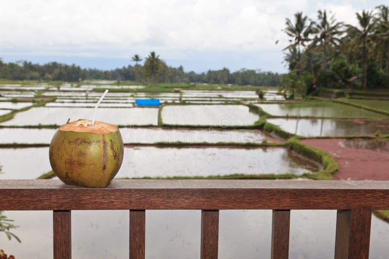 Kokosnötdrink på lyxig balkong royaltyfria bilder