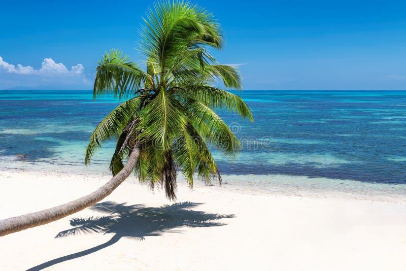 Kokosnöten gömma i handflatan över den exotiska stranden på den tropiska ön royaltyfri foto