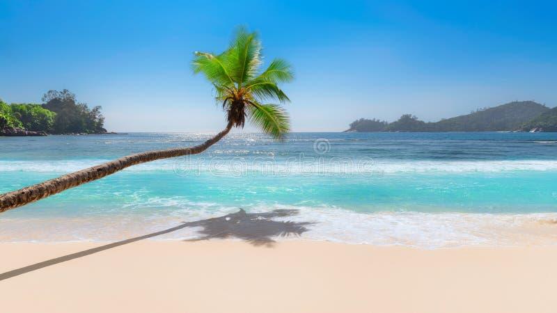 Kokosnöten gömma i handflatan över tropisk strand- och turkosseanut royaltyfri foto