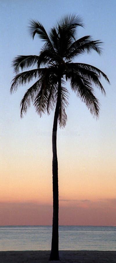 kokosnöten gömma i handflatan den enkla treen royaltyfri foto