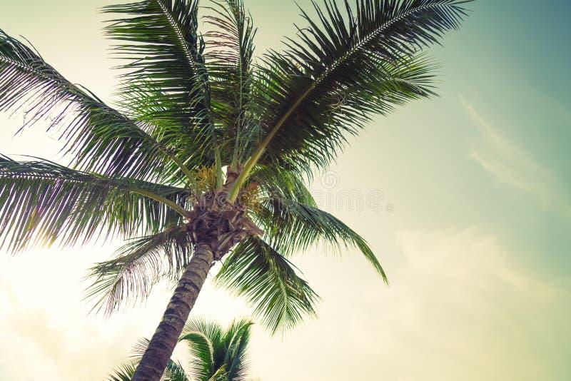 Kokosnöten gömma i handflatan (filtrerad bilden bearbetad tappningeffekt ), arkivfoton