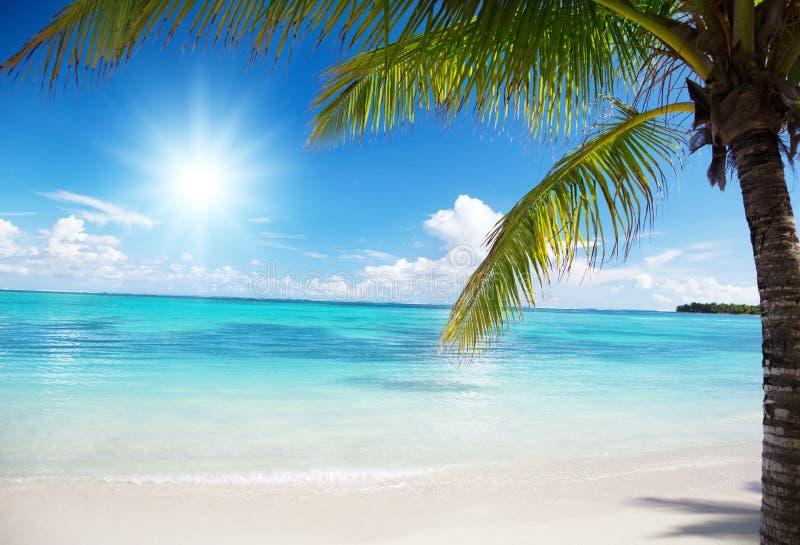 kokosnöten gömma i handflatan havet royaltyfri foto
