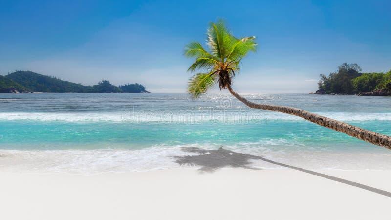 Kokosnöten gömma i handflatan på den tropiska stranden royaltyfri foto