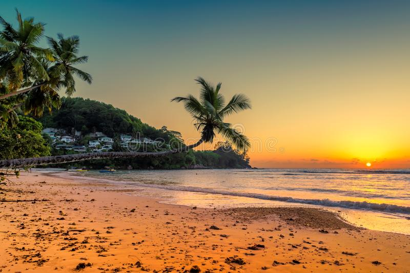 Kokosnöten gömma i handflatan på solnedgången över den tropiska stranden royaltyfri bild