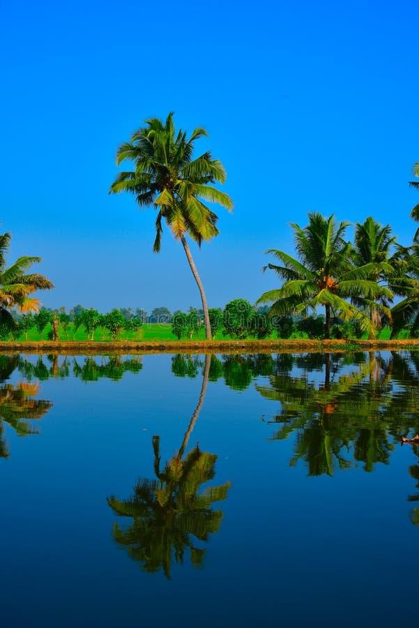 Kokosnöten gömma i handflatan reflexion royaltyfria bilder