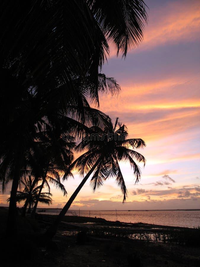 kokosnöten gömma i handflatan solnedgång fotografering för bildbyråer