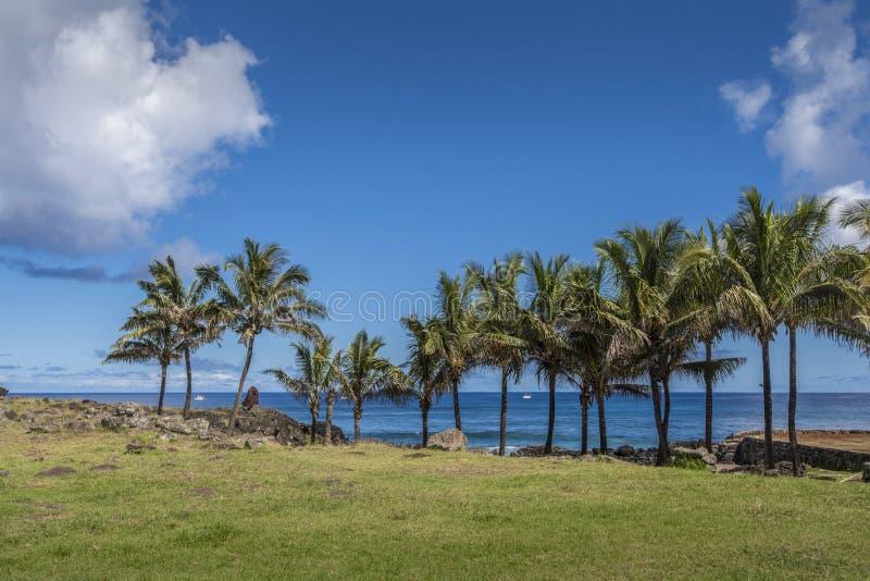 Kokosnöten gömma i handflatan uppställt på kusten av Hanga Roa royaltyfri fotografi
