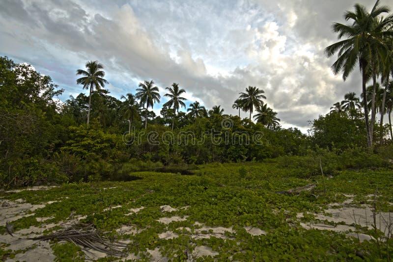 Kokosnöten trädgård, parkerar arkivfoton