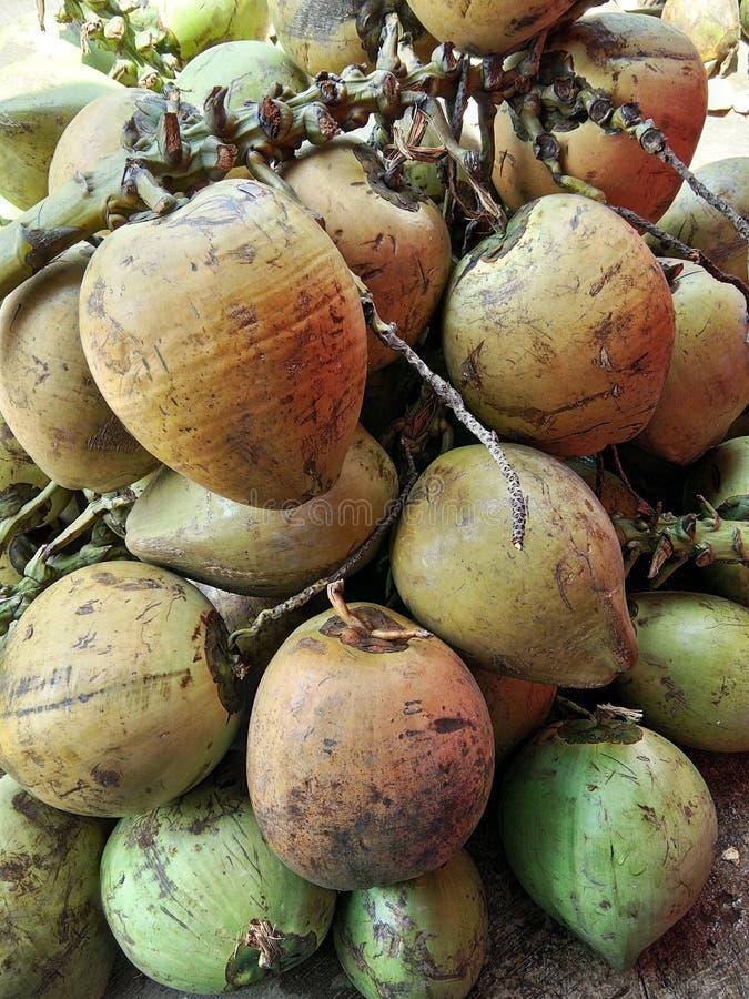 Kokosnötfrukter fotografering för bildbyråer