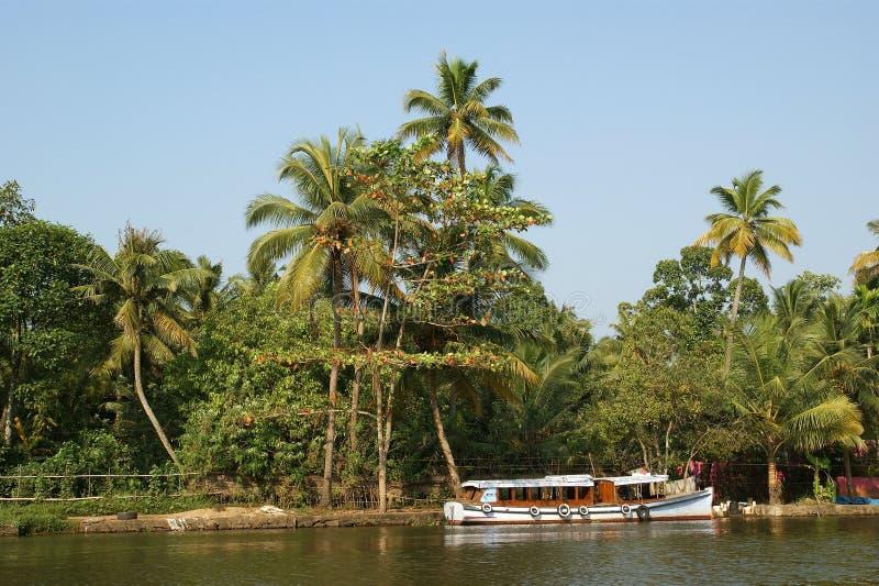 kokosnötlaken gömma i handflatan kusten fotografering för bildbyråer