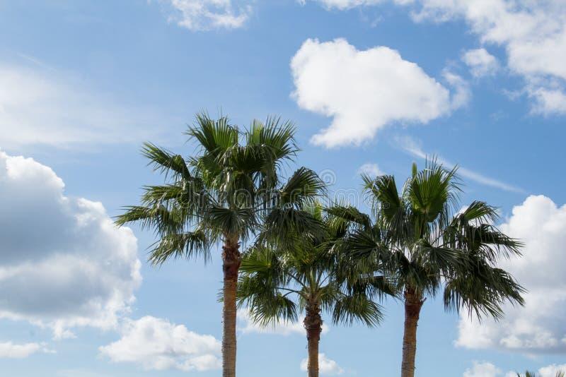 3 kokosnötpalmträd royaltyfria foton