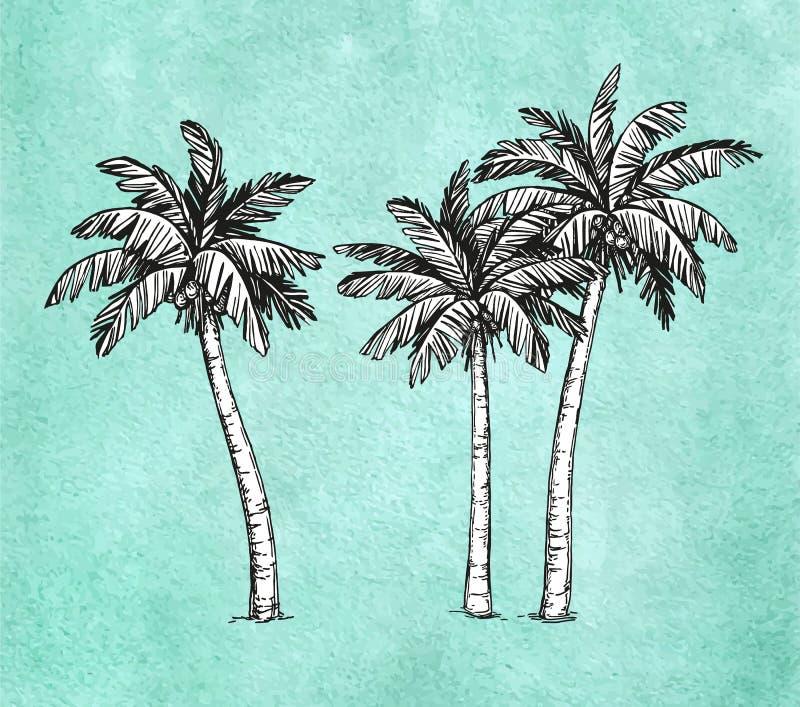Kokosnötpalmträd vektor illustrationer