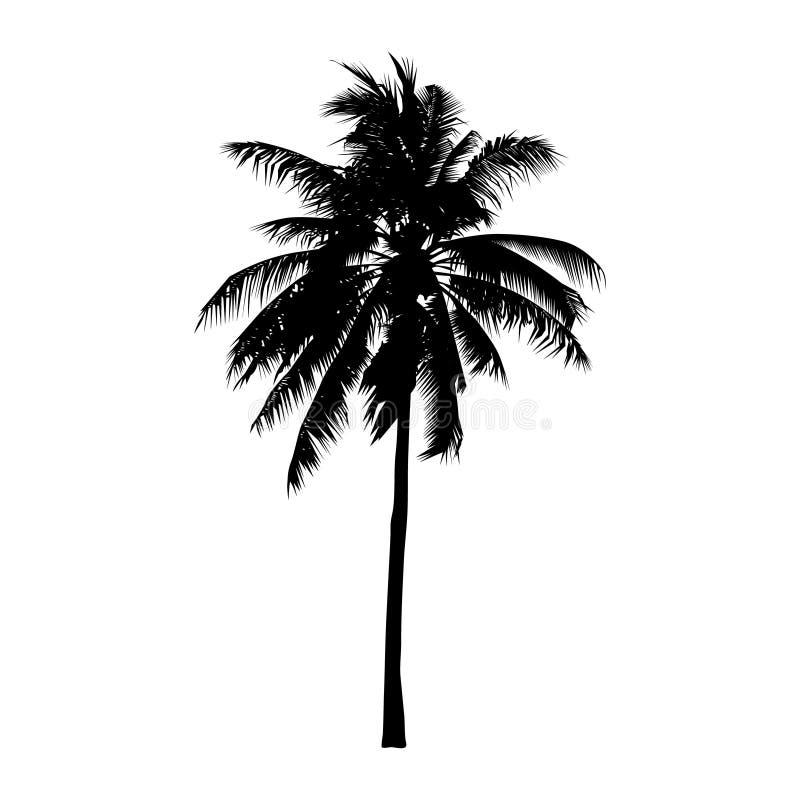 Kokosnötpalmträd, isolerat naturligt tecken, vektor vektor illustrationer