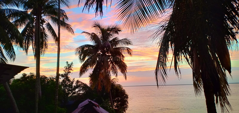 Kokosnötpalmträd nära kropp av vatten royaltyfria bilder