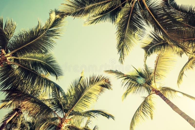 Kokosnötpalmträd och glänsande sol över ljus himmel royaltyfri bild