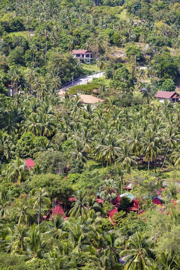 Kokosnötpalmträd och hus i tropisk strand på ön Koh Phangan, Thailand arkivbilder