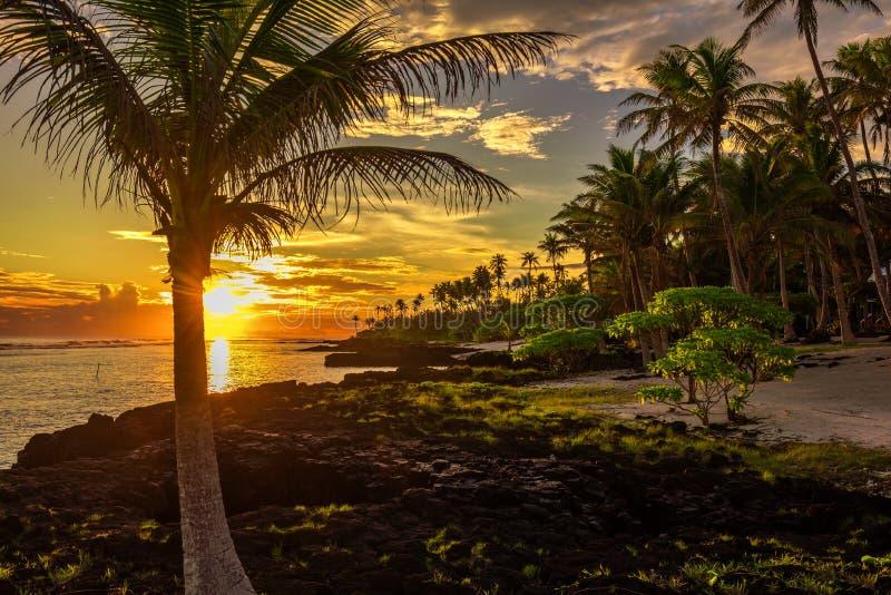 Kokosnötpalmträd och svart vaggar på stranden under sunsen royaltyfria bilder