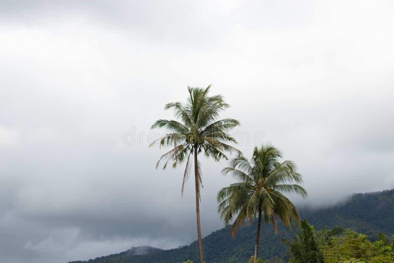 Kokosnötpalmträd på ön med mist efter regnnedgång i nat royaltyfri bild