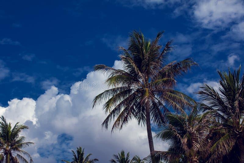 Kokosnötpalmträd på bakgrund för blå himmel royaltyfria bilder