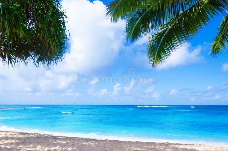 Kokosnötpalmträd på den sandiga stranden i Hawaii, Kauai royaltyfria foton