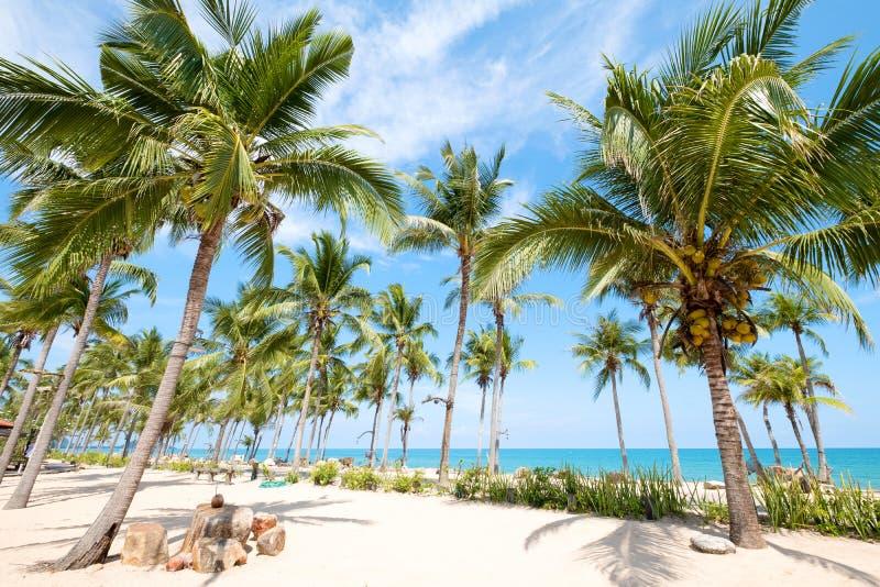 Kokosnötpalmträd på den tropiska stranden i sommar arkivfoton