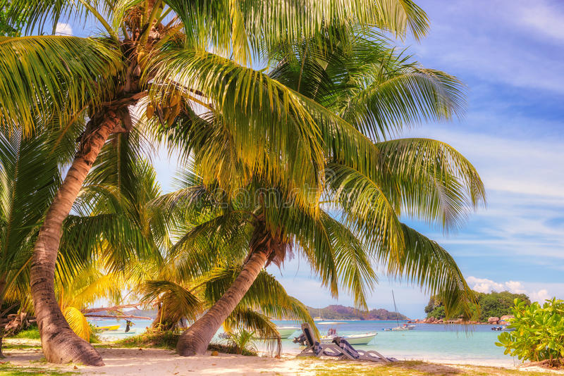 Kokosnötpalmträd på det tropiska strand- och blåtthavet royaltyfri bild