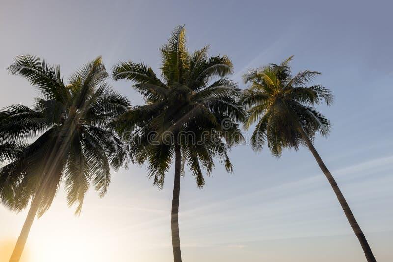 Kokosnötpalmträd på solnedgången royaltyfri bild