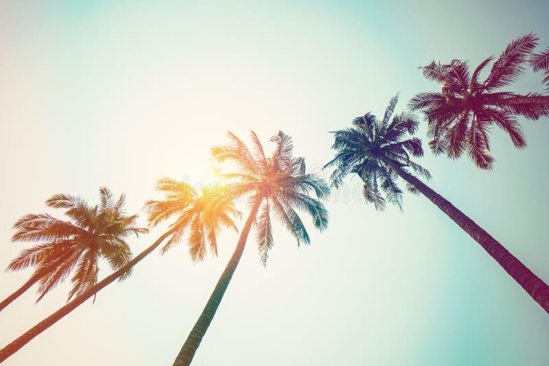 Kokosnötpalmträd på stranden och solljus med tappning tonad effekt royaltyfria foton