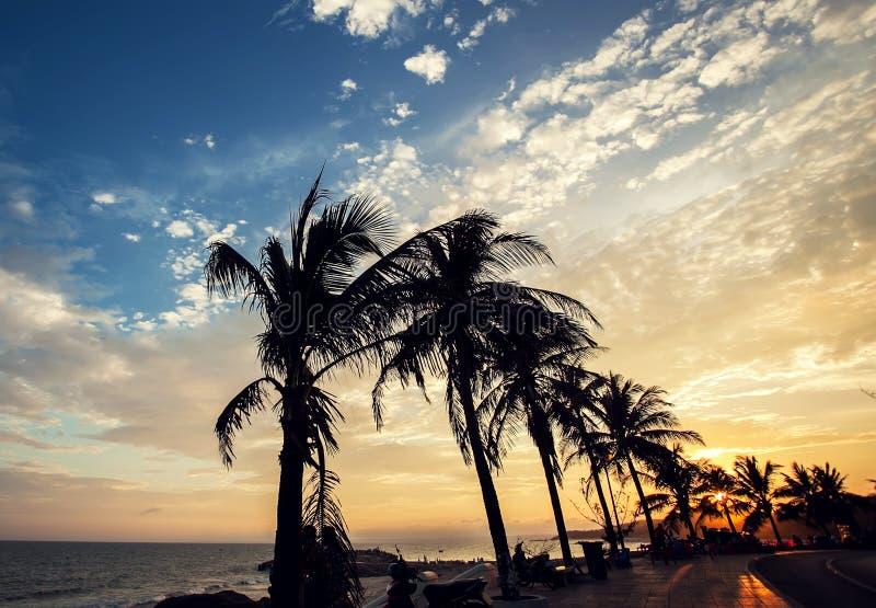 Kokosnötpalmträd på stranden på solnedgången royaltyfri foto