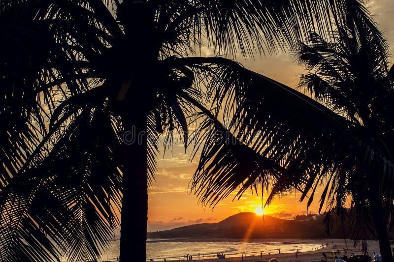 Kokosnötpalmträd på stranden på solnedgången royaltyfri fotografi