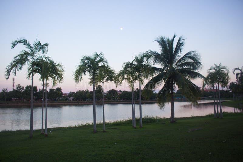 Kokosnötpalmträd silhouetted mot himmel på solnedgången royaltyfri fotografi