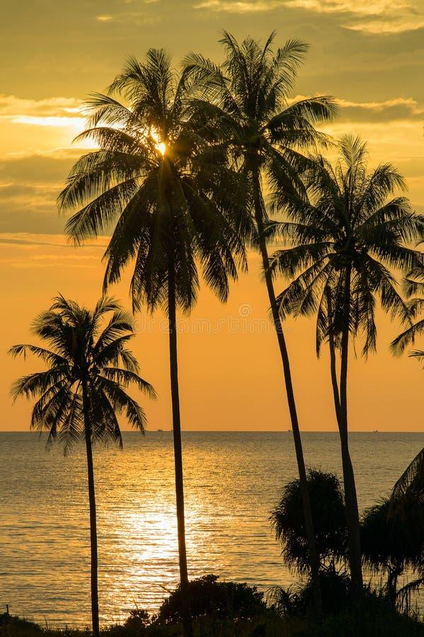 Kokosnötpalmträdkontur på solnedgången i Thailand royaltyfria bilder