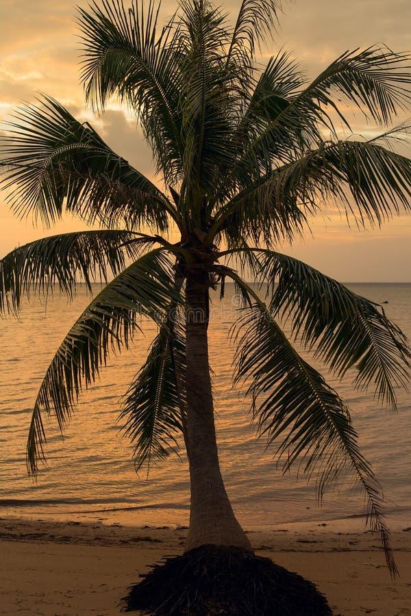 Kokosnötpalmträdkontur på solnedgången i Thailand arkivbild