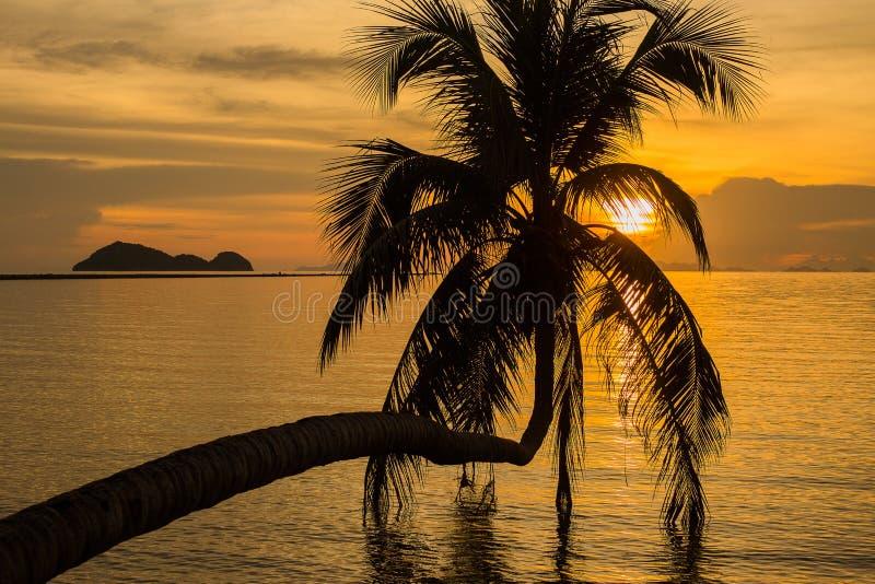 Kokosnötpalmträdkontur på solnedgången i Thailand royaltyfri foto