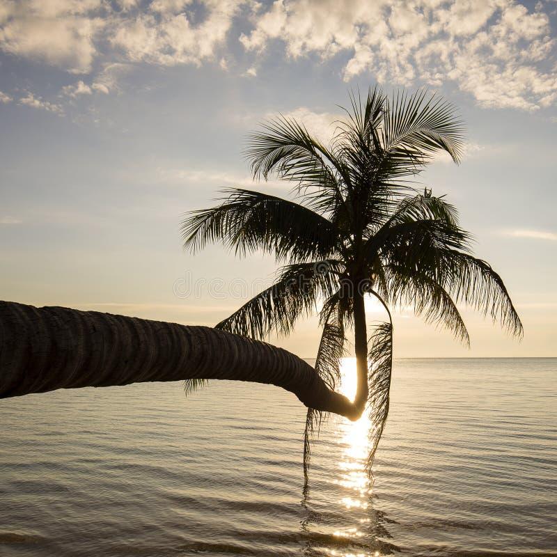 Kokosnötpalmträdkontur på solnedgången Koh Phangan ö, Thailand royaltyfria bilder