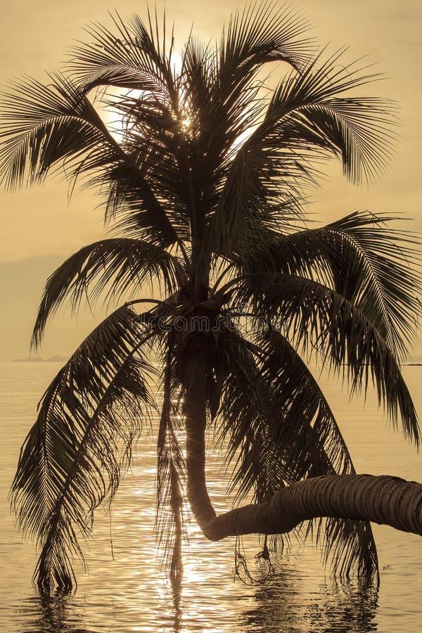 Kokosnötpalmträdkontur på solnedgången Koh Phangan ö, Thailand arkivfoto