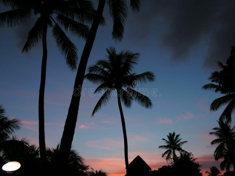 kokosnötsemesterortsolnedgång arkivfoto