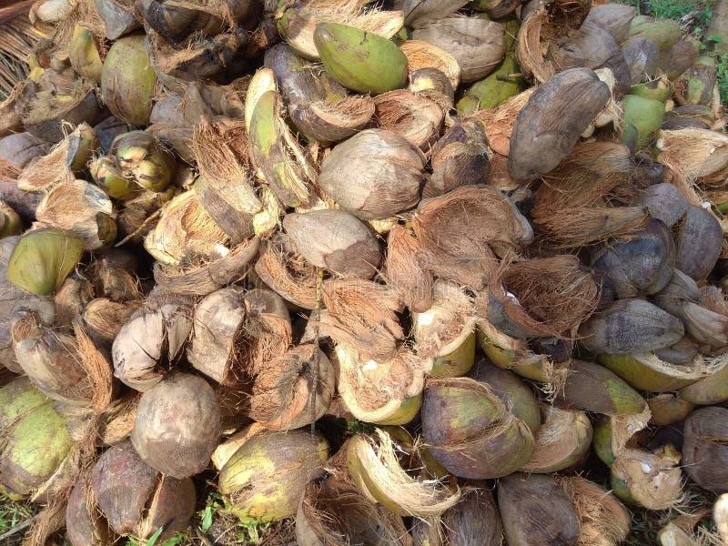 Kokosnötskal arkivfoto