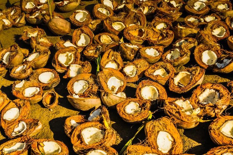 Kokosnötskal på jordning royaltyfria foton