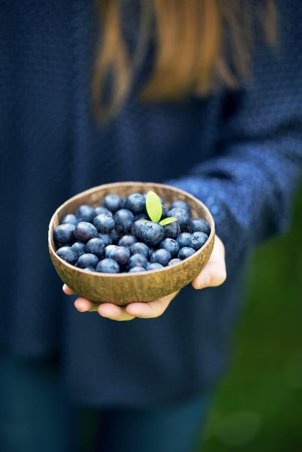 Kokosnötskalbunke mycket av nya organiska blåbär i flickas hand royaltyfria foton