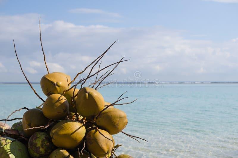 Kokosnötter Boca Chica strand, Dominikanska republiken som är karibisk royaltyfria bilder